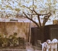 Rick e Lampo nel 1980