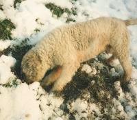 Rudy nel 1994 con la neve